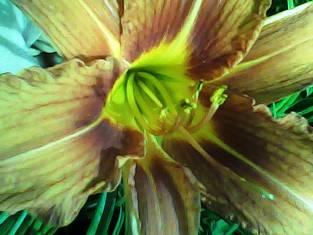 Цветы появились на Земле 240 млн лет назад